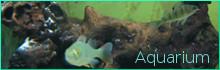 Wirtschaftswetter-Schwerpunktthema: Aquarium, Link Werbeseite