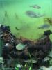Foto Aquarium, Link Fotogalerie