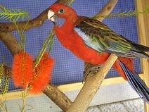 Bild, Vogel-Pflegling, Link zu Wires