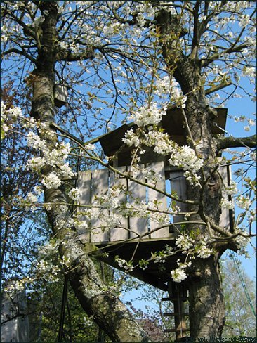 Frühling, Baumhaus 1