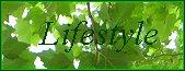 Wirtschaftswetter-Lifestyle, Schwerpunkt Greensleeves, Link Werbeseite