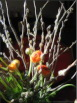 Ostern at home 2