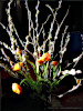 Ostern at home 4