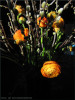 Ostern at home 7