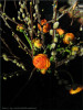 Ostern at home 8