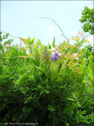 Sommer, Blumen, Wiese, Flora 1
