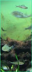 Foto, Beispiel-Anzeige Aquaristik