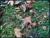 Herbst XIII