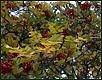 Herbst XV