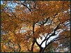 Herbst XVII
