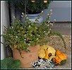 Herbst IV