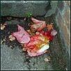 Herbst V