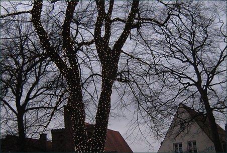 Weihnachtsbaum, November
