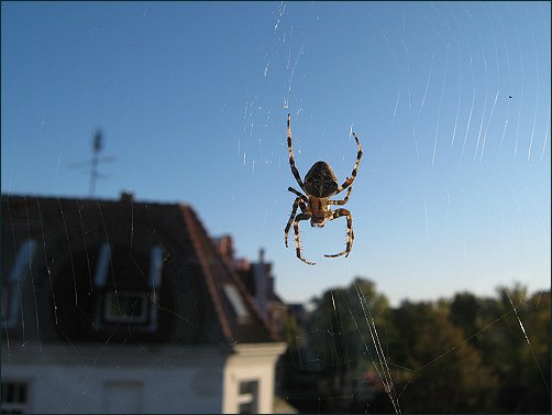 Spinnennetz, Autumn Colours