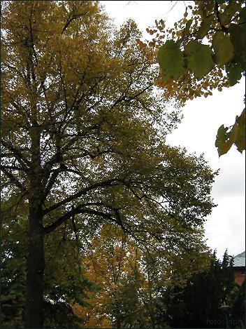 Grüngelbbraun, Autumn Colours