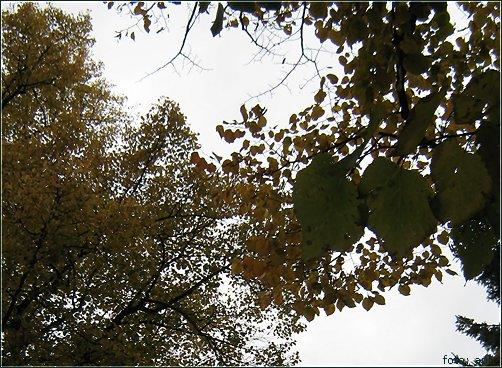 Grüngelbbraun II, Autumn Colours