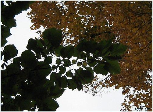Grün-Weiß-Braun, Autumn Colours
