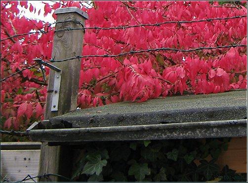 Rotes Dach, Autumn Colours