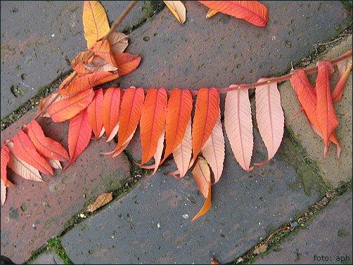 Blätter und Steine in Pastell, Autumn Colours