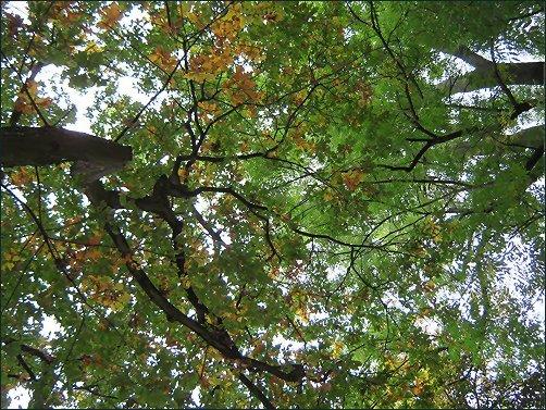 Dach, Blätter, Autumn Colours