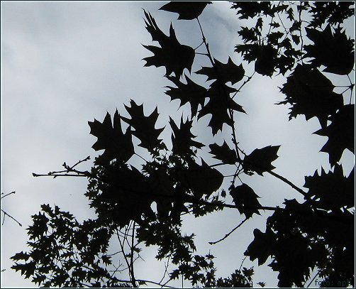 Blätter mit Zacken, Autumn Colours