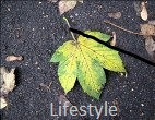 Wirtschaftswetter-Ressort Lifestyle