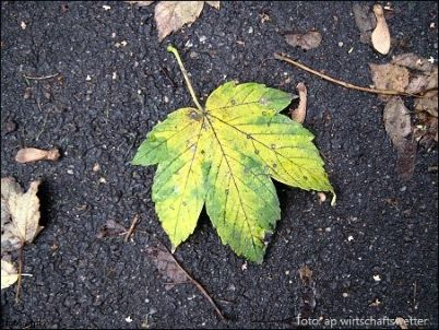 Herbstblatt auf Asphalt 2