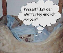 Hund versteckt sich vorm Muttertag